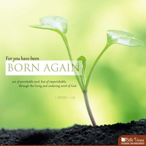 Kelahiran Baru