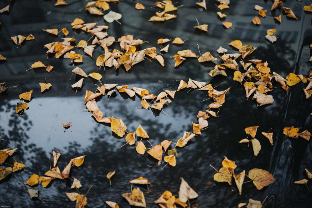 Gambar: Love Leaf