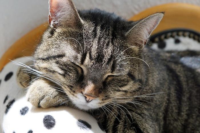 Gambar: Kucing