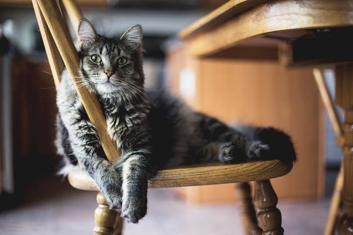 Gambar: Kopi kucing