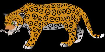 Gambar: Leopard