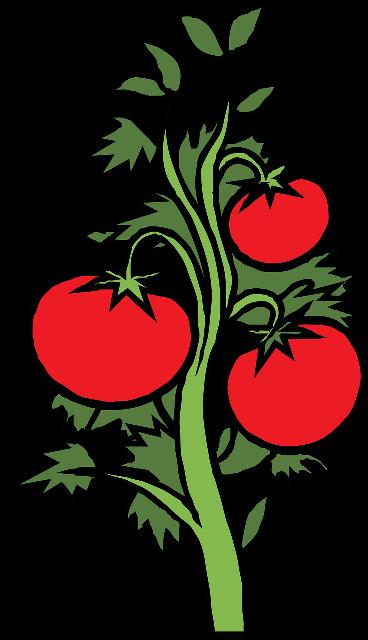 Gambar: Tomat