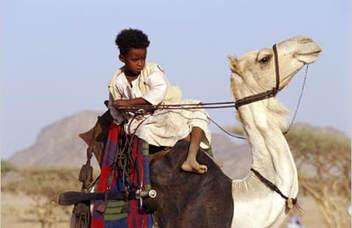 Beja Bedawi