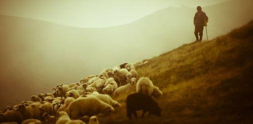 Gambar: Gembala