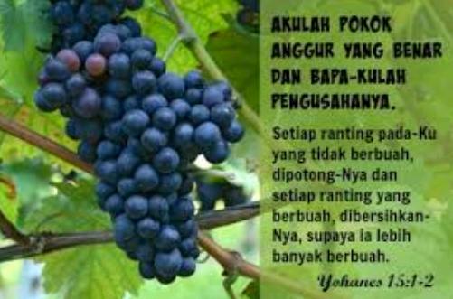 Pokok Anggur
