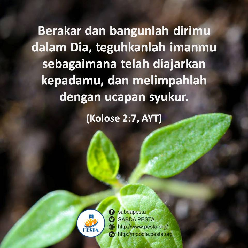 Quote Kolose