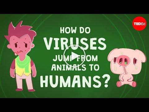 Bagaimana Virus Berpindah dari Binatang ke Manusia?